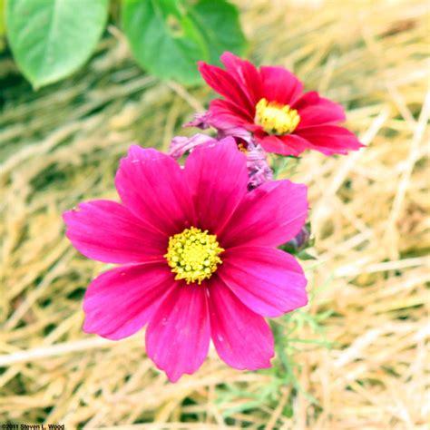 flower in the garden flowers in a garden flower inspiration