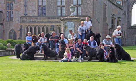boatswain a dog lord byrons boatswain