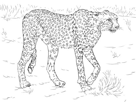 Realistic Cheetah Coloring Pages by Cheetah Coloring Pages Free Printable Cheetah Coloring Pages