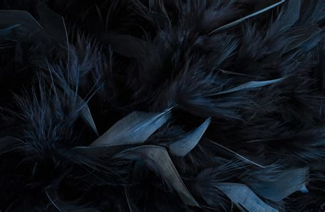 what do black feathers mean wishing moon