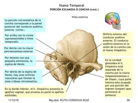 imagenes de huesos temporales huesos del craneo