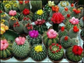 colorful cactus colorful cactus garden plants