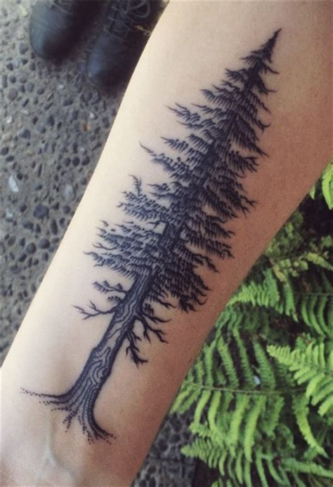 redwood tree tattoo top tattoos of the week nov 5 2014