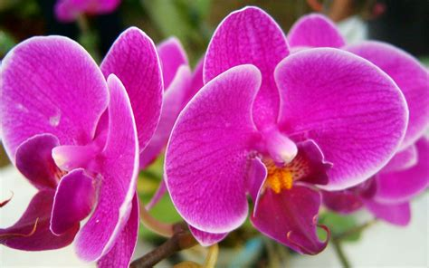flower wallpaper online important information flowers pictures images
