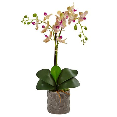 nearly indoor phalaenopsis silk orchid in