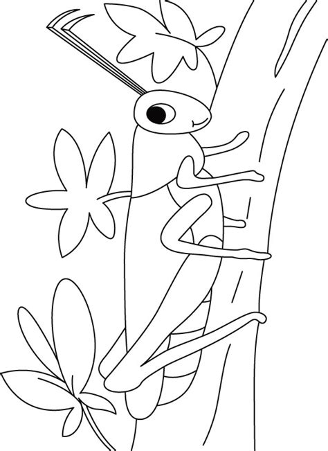 free life cycle of grasshopper coloring pages