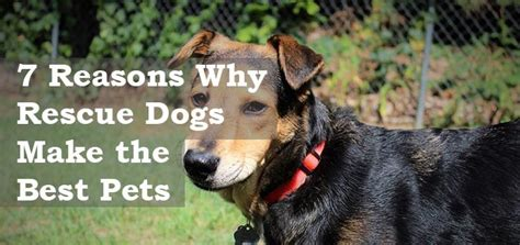 7 Reasons To A Pet by Your Woof A Dedicated To