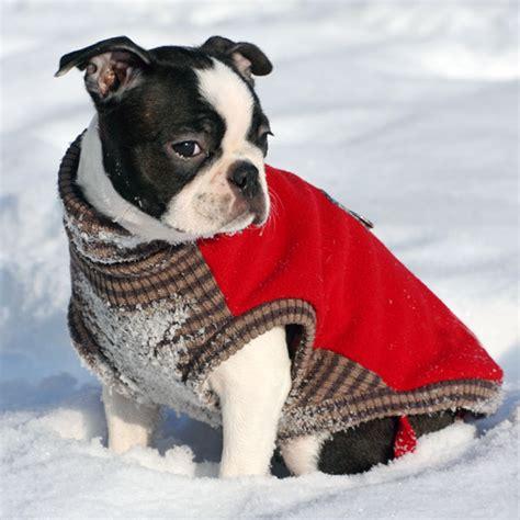boston terrier puppies michigan pin boston terrier puppies akc registered in conklin michigan hoobly on