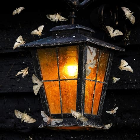 lights that don t attract bugs why do insects always go on a suicidal mission towards a