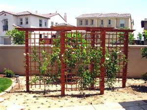 Backyard Grape Trellis Trellises Here S A Lovely Backyard Grapevine