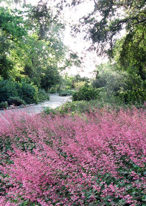 Drystonegarden 187 Blog Archive 187 Rancho Santa Ana Botanic Rancho Santa Botanical Gardens