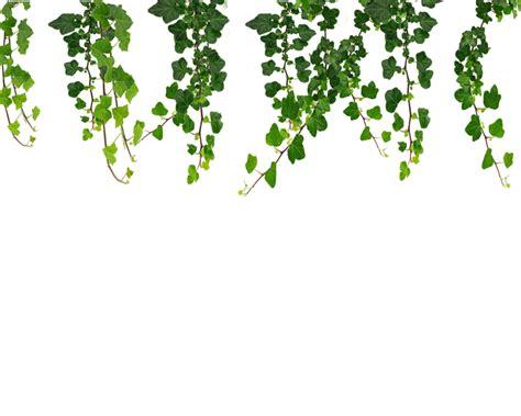 Daun Rambat Merambat Artificial Leaf Leaves Climbing Garland 3 hanging vines png by moonglowlilly on deviantart