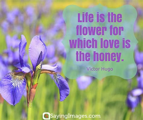 42 beautiful flower quotes sayingimages com