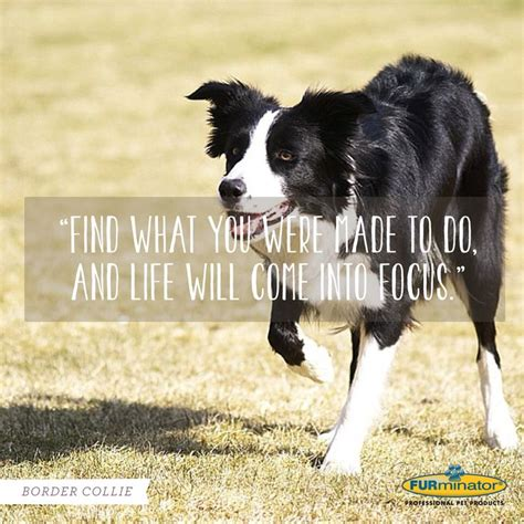 Dogs Motto 18 best images about breed mottoes on