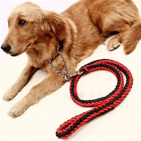 golden retriever collars 17 best ideas about tibetan mastiff puppies on tibetan mastiff big