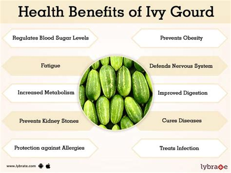 ivy gourd facts  health benefits lybrate