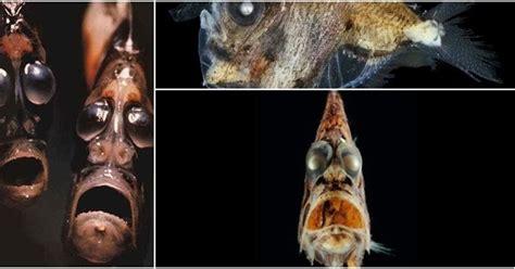 kumpulan berita aneh di dunia 7 bentuk mahkluk laut paling mengerikan di dunia