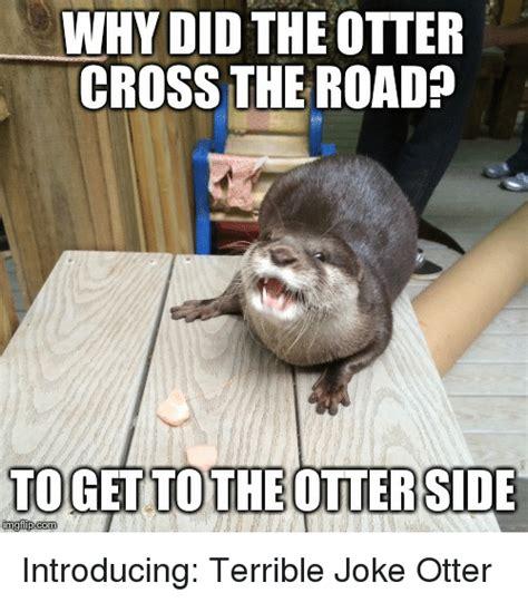 otter meme otter gif memes of 2017 on sizzle spent