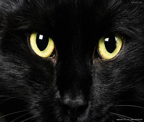 imágenes gato negro supersticiones que traen mala suerte
