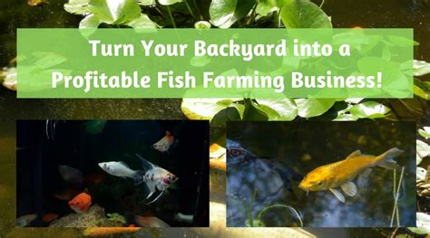 profitable backyard farming turn your backyard into a profitable fish farming business