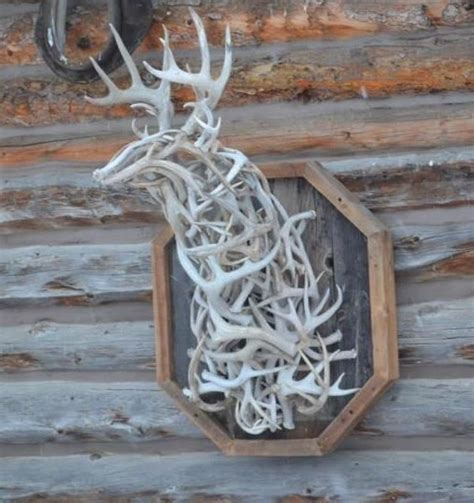 Do All Deer Shed Antlers by Antlers Something To Make With All Hubby S Deer Sheds