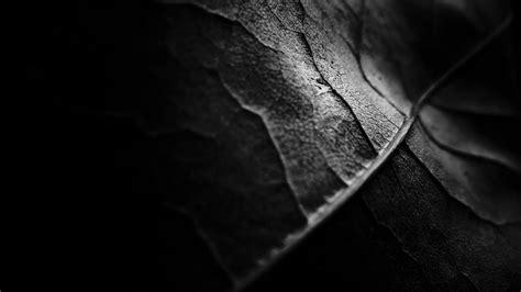 wallpaper hd dark nature 1920x1080 dark nature leaves 1080p full hd wallpapers