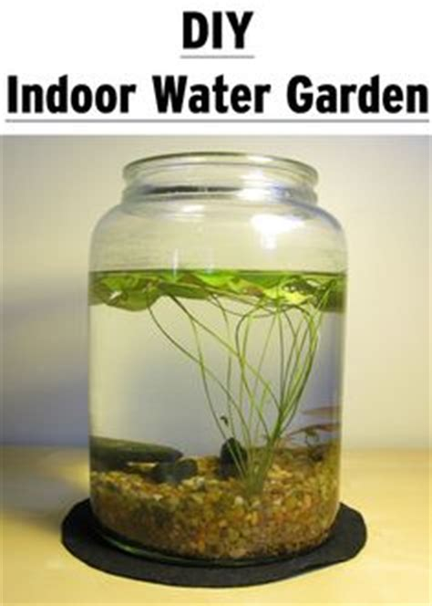 make your own stunning indoor tabletop water garden