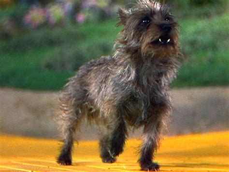 what of was toto best actors being pawsitive