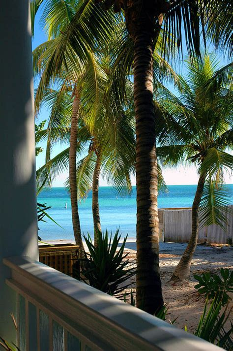 louie s backyard key west fl louie s backyard print by susanne van hulst