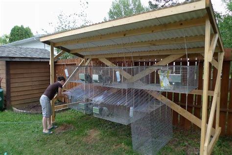 gabbie per conigli da allevamento allevamento conigli da carne conigli