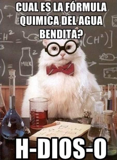imagenes memes quimica los memes del gato qu 237 mico que arrancan carcajadas con su