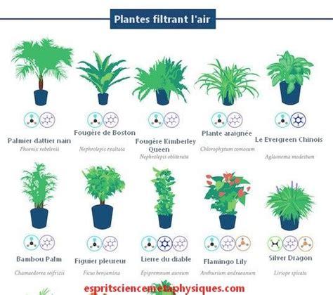 Plantes Appartement Sombre by Mini Plantes D Int 233 Rieur Photo De Fleur Une Pensee