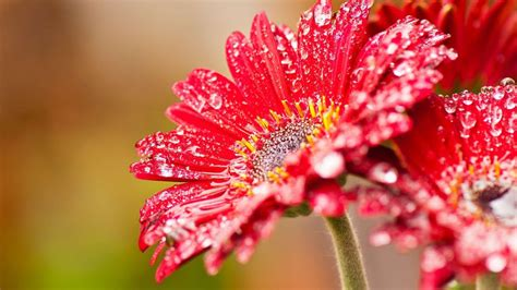 beautiful flowers image 40 beautiful flower wallpapers free to download