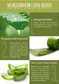 Pelembab Lidah Buaya 1000 images about teh annona annona tea on