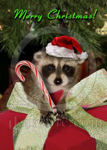 christmas raccoon   purchase    wider select flickr