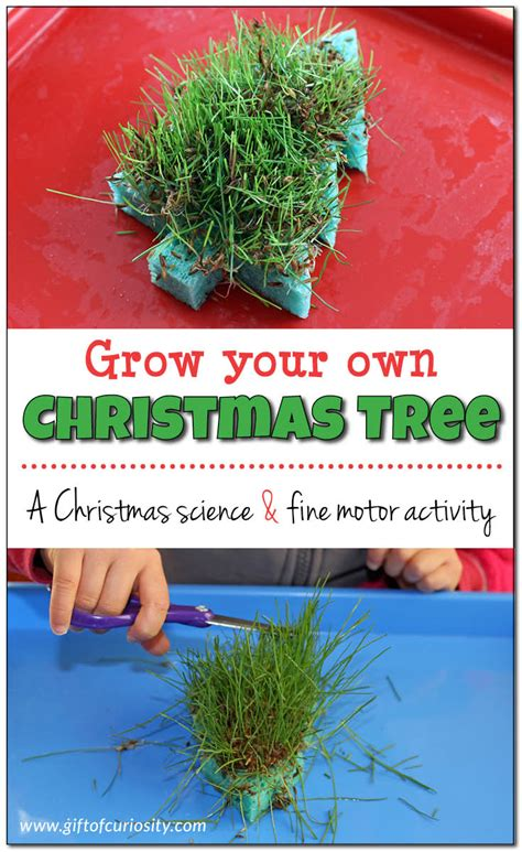 grow your own christmas tree sponge gift of curiosity