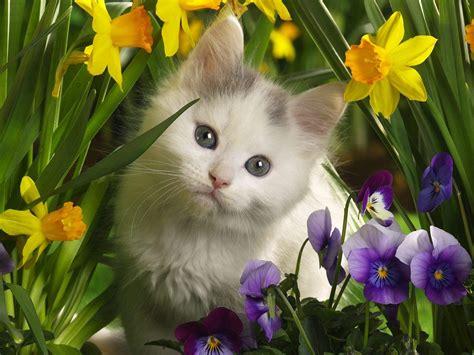 funny cute cats beautiful cats hd wallpapers