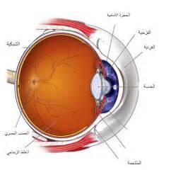 Conjunctivitis Blindness أجزاء العين البشرية Human Eye Russian Eye Center