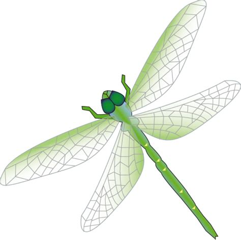 dragonfly clipart dragonfly graphic cliparts co