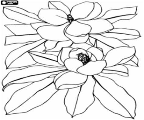 coloring pages of magnolia flowers magnolia flowers coloring page printable