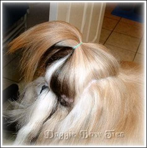 shih tzu topknot how to make a simple casual shih tzu topknot by doggie bow ties