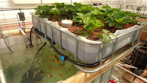 aquaponic backyard high crop production aquaponics grozinegrozine