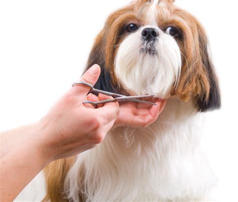 Pet Shedding by Como Tosar Cachorro Dicas De Tosa