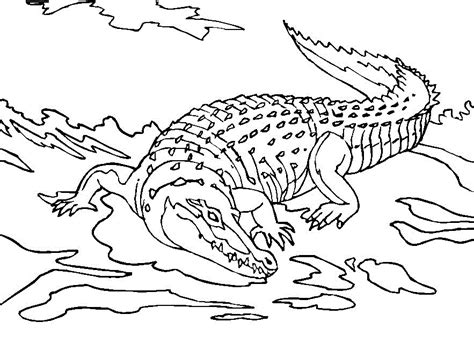 Free Printable Crocodile Coloring Pages For Kids Alligator Coloring Pages