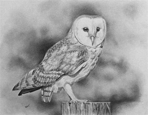 Barn Owl Drawing By Ed Teasdale Barn Owl Drawing