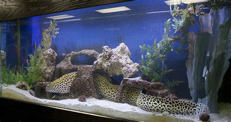 aquarium design video fish aquarium design 187 design and ideas