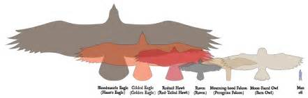 bird wingspan comparison chart www imgarcade image arcade