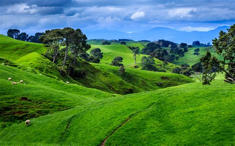wallpaper 4k new fields in new zealand 4k ultra hd wallpaper 4k wallpaper net