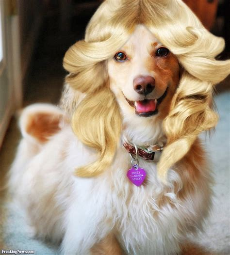haired puppies with blond hair pictures freaking news