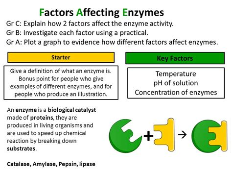what factor affects the color of a factors affecting enzymes ppt